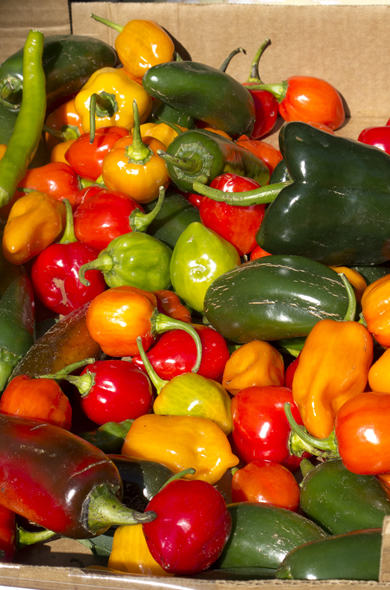 charleston_market_peppers_390_590