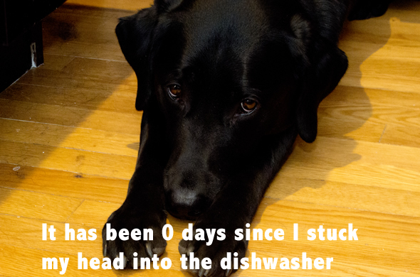 chick_caesar_dog_dishwasher