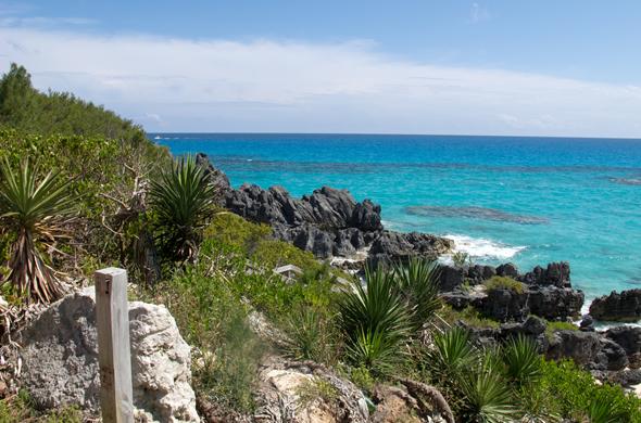 bermuda_beach_590_390