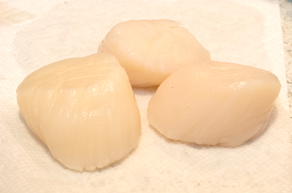 scallop_blt_scallops_590_390