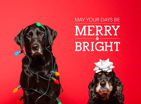 The Three Bite Rule - Happy Holidays